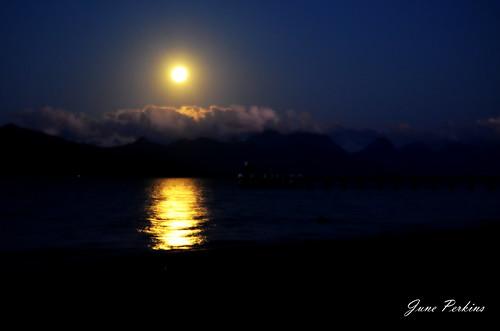 moonlight trip 022-002