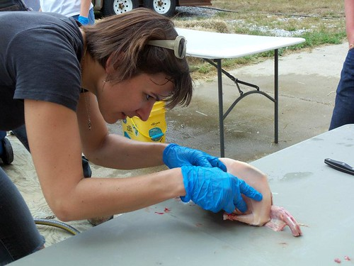 20120728. Distelrath Farms' poultry processing workshop.
