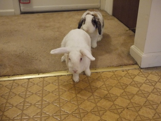 gus and betsy begging for treats by the front kitchen door