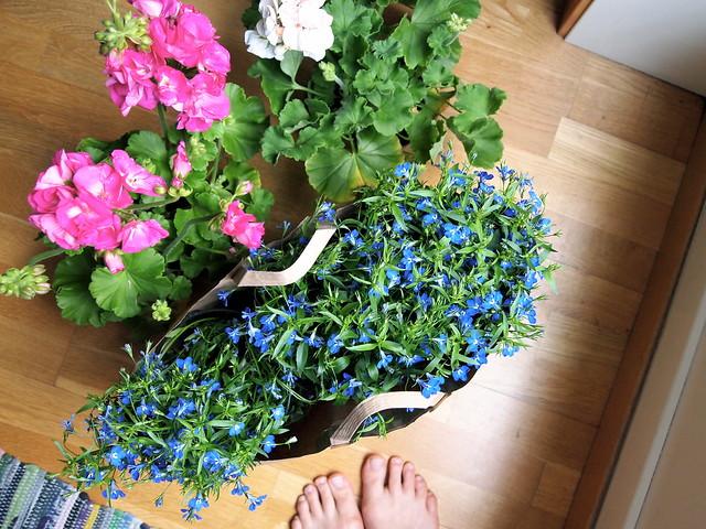 Flower shopping