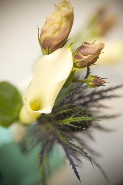 Flower081