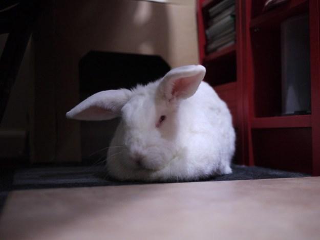 mr. grumpy bun