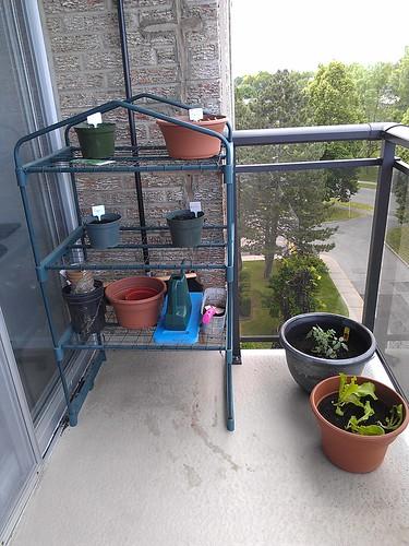 Basil, Parsley, Sage, Oregano, Tomato, Lettuce