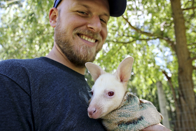 travis with albino baby kangaroo