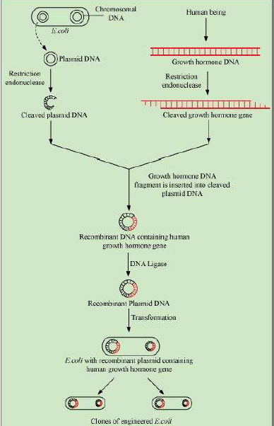 Biotechnology and its Applications chapter 12 ncert class 12