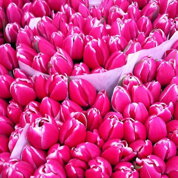 Flores numa feira em Berlin