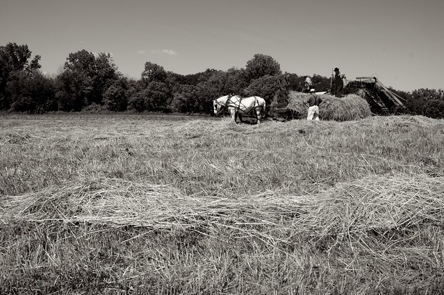 Making Hay 3