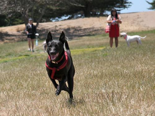 Annie runs free