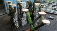Birch Risers