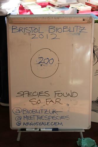 BioBlitz Tally 16:20 - Saturday