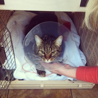 Save Our Therapy Cat