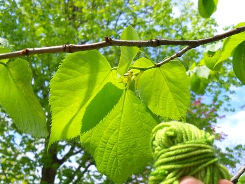 leafy yarn