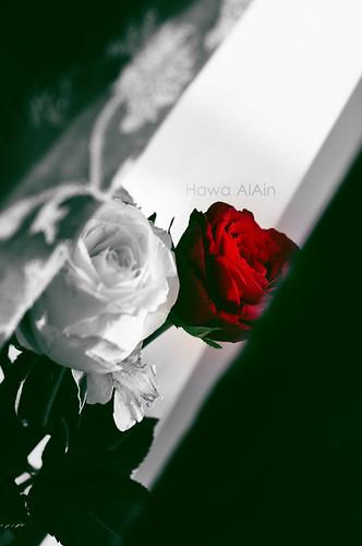 شَربت من الهَوى ، وَ أفعَمتْ كاسي . . by Hawa Alain ♥ @AlAinTHEUAE