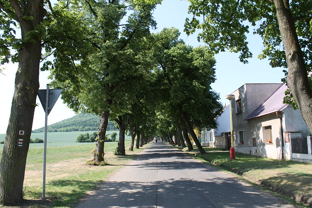 On the way to Říp, under the shade...