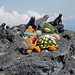 Muk Muk and Boxer Duck hang with the iguanas