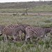 Etosha National Park impressions, Namibia - IMG_3286_CR2_v1