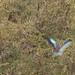 Etosha National Park impressions, Namibia - IMG_3290_CR2_v1