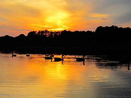 Day 258 Geese Silhouetted in Golden Sunset by pixygiggles