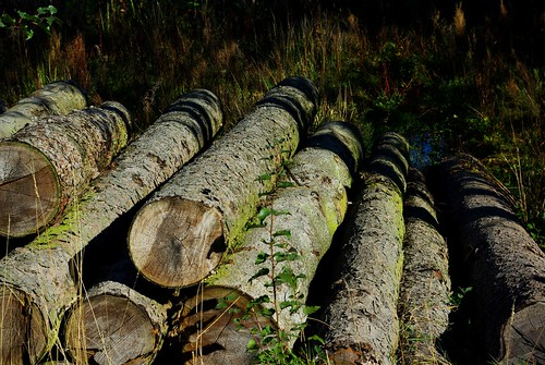 20120908-05_Log Pile_Home Farm_Hatton by gary.hadden