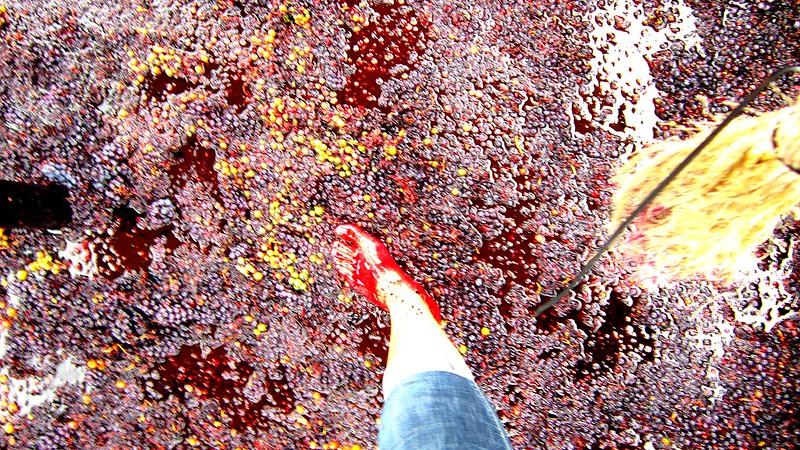 Fe y legalidad de mi primera vez pateando uvas :3