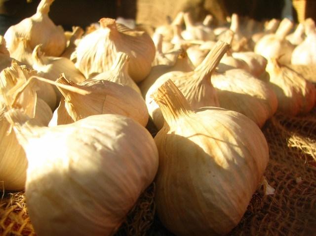 Sunlit Garlic - Sweet and Savoring