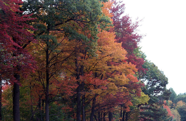 Michigan Autumn Colors - 2012