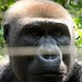 Mefou Primate Sanctuary impressions, Cameroon - IMG_2509_CR2_v1