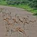 Etosha National Park impressions, Namibia - IMG_3067_CR2_v1