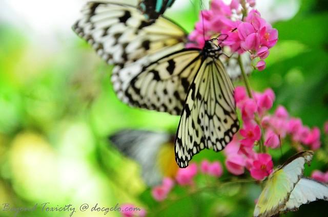 free spirit : butterflies