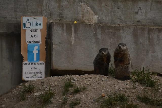 Groundhog Couple