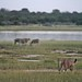 Etosha National Park impressions, Namibia - IMG_3260_CR2_v1