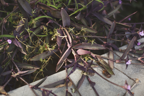 003_karen seifert plants richmond va
