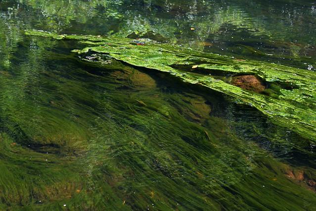 Stream algea