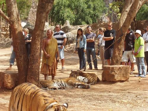 200901280083_tiger-temple