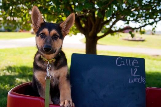 Callie, 12 Weeks
