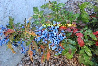 berries in front of the hotel in revelstoke