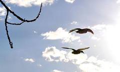 En vol vers le soleil