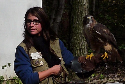 Hawk Mountain educator with red-tailed hawk.