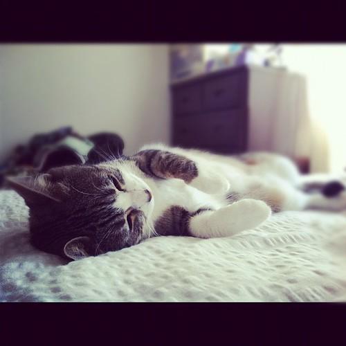 #catsummerfes_2012