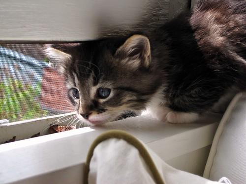 Amanda's Window