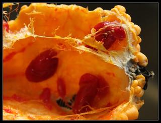 Sweet Goya seeds