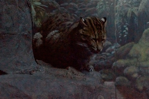 Mamma Fishing Cat