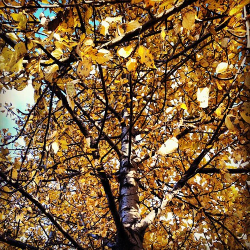 #yellow #autumn #tree