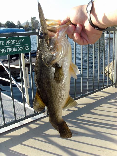 3.5 Pound Ima Skimmer Bass