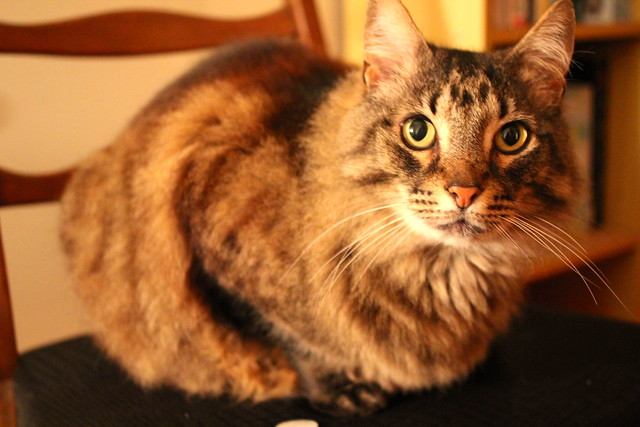 A cat called Sebastian