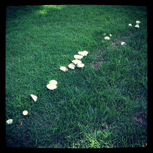 Fairy ring at the park today.
