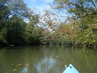 Fall Leaves on the Saluda River
