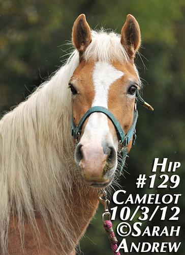 Hip #129