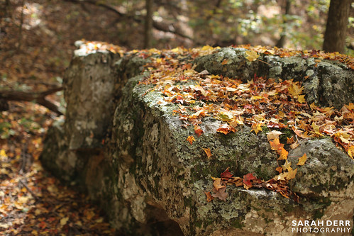 Fallen Rock and Leaves