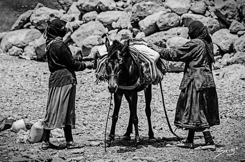 Bereber and donkey